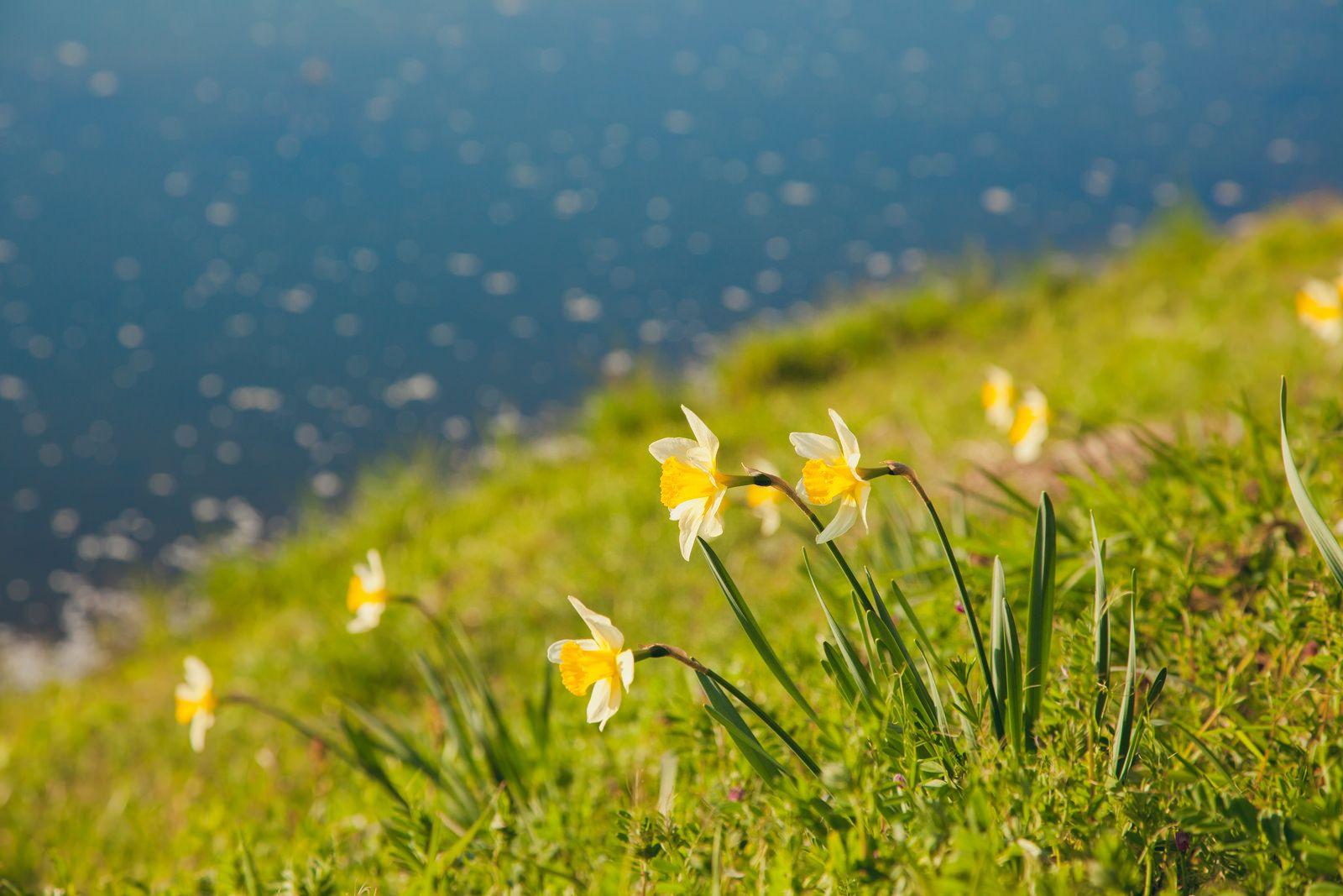 Little Yellow Flowers Bokeh Ocean Outdoors Nature Flowers Field Hill