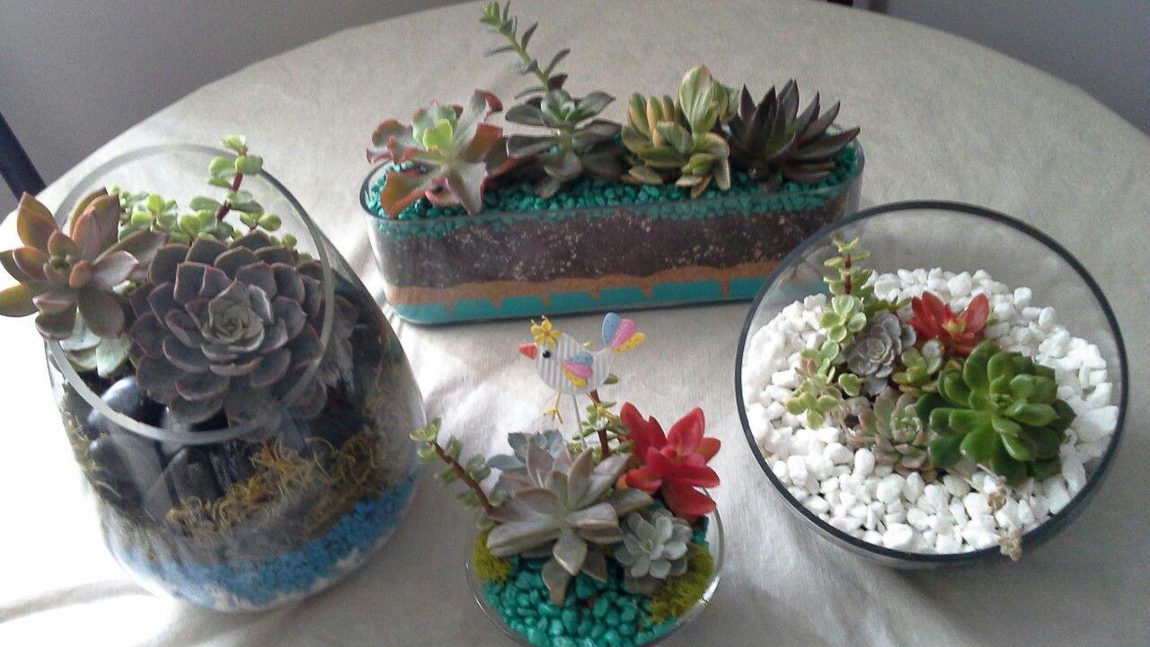 Mis succulentas