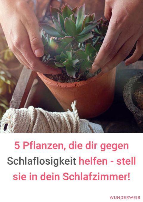Diese Pflanzen solltest du im Schlafzimmer haben #pflanzenimschlafzimmer