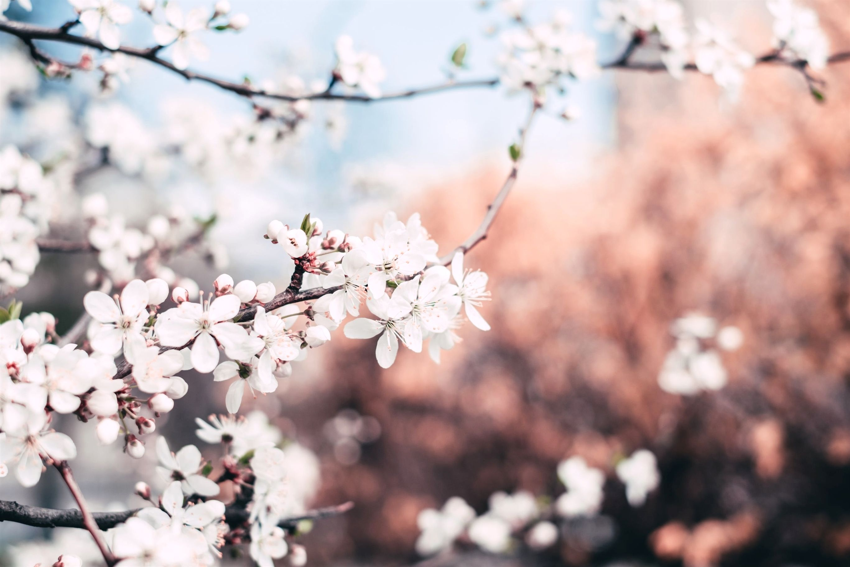 Gardening Offers At Aldi 592 20191114082504 53 National Garden Gift Vouchers Uk To Australia Lo Cherry Blossom Pictures Organic Horticulture Plant Nursery