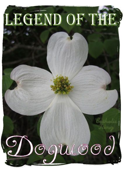 the legend of the dogwood tree a fun and religious tradition for kids during this easter season