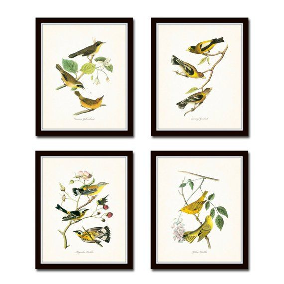 Audubon Bird Prints Set No. 2, Botanical Prints