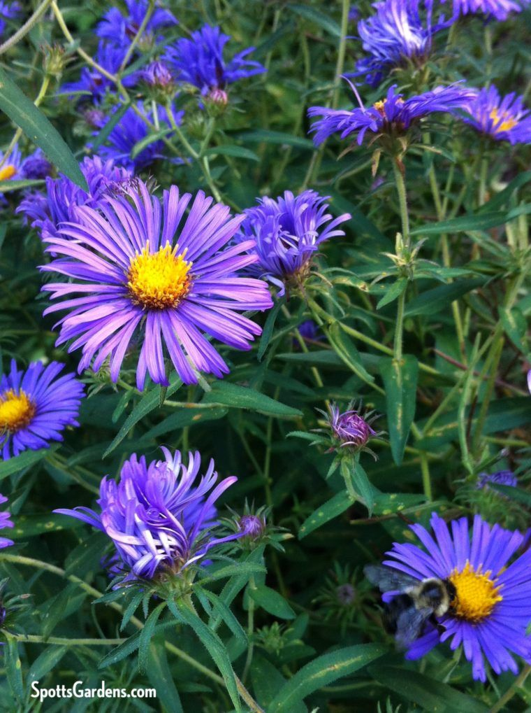 Not So Common Native Plants For Midwestern Gardens Plants