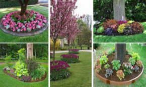 20 plants Flowers around trees ideas