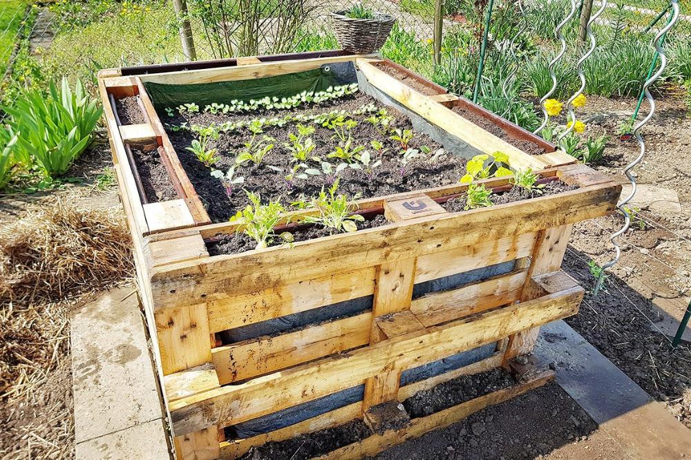 Diy Hochbeet Bauen In 2020 Hochbeet Hochbeet Aus Paletten Hochbeet Bepflanzen