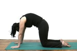 how to do catcow stretch chakravakasana in yoga  cat