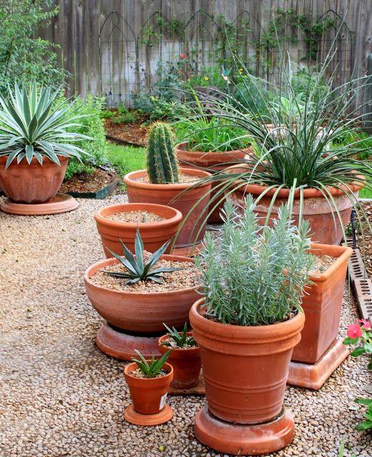 Container Cactus