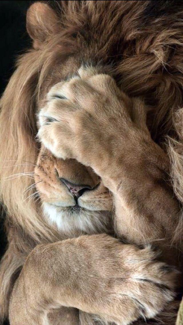 Photo of Tiere Hintergrundbild iPhone –  Tiere Hintergrundbild iPhone  – #albinoanimal #a…
