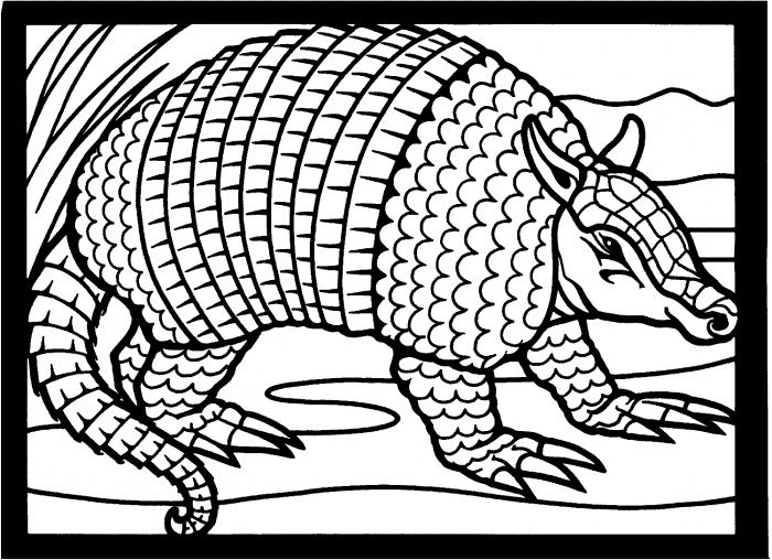 Armadilo 9 With Images Armadillo Art Coloring Pages Armadillo
