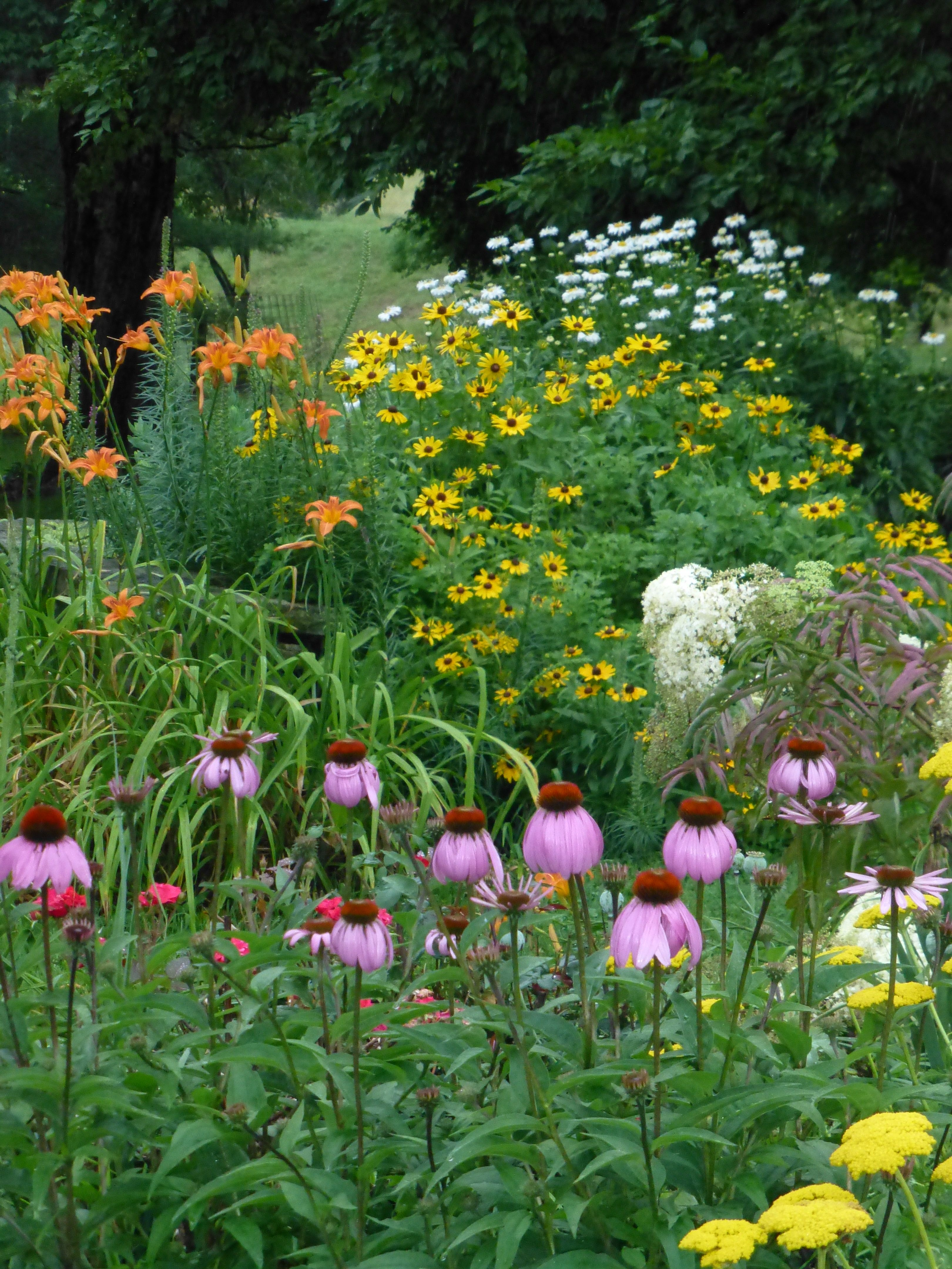 Orange Roadside Daylily Yellow Gloriosa Daisy With Brown Centers