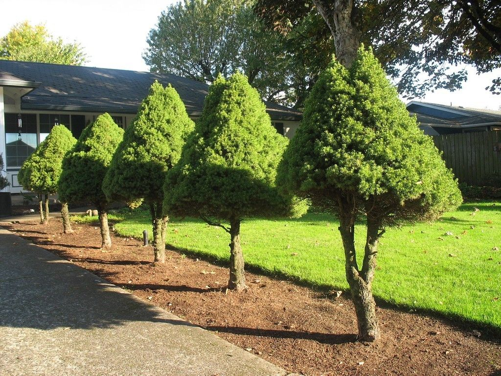 Trees That Please The Landscape Small Landscape Trees Patio Landscaping Front Yard Garden