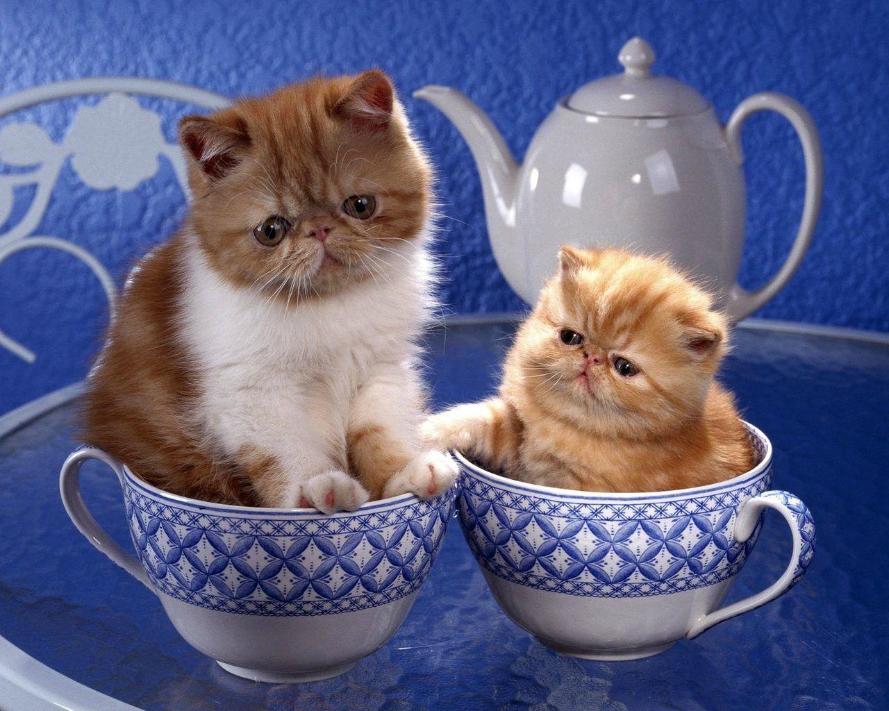 Открытки с котами и добрым утром, картинка