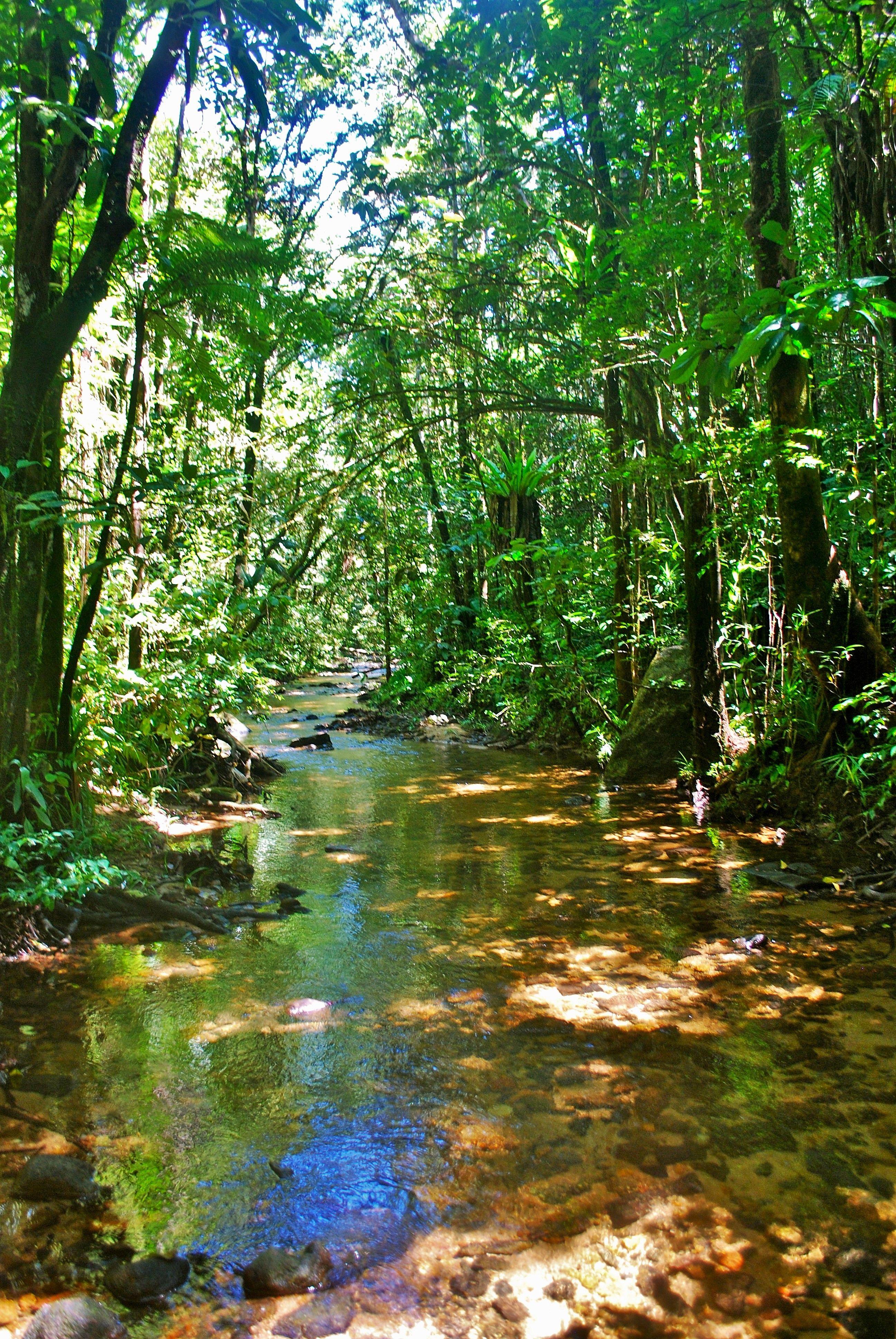 Madagascar 4 Stream