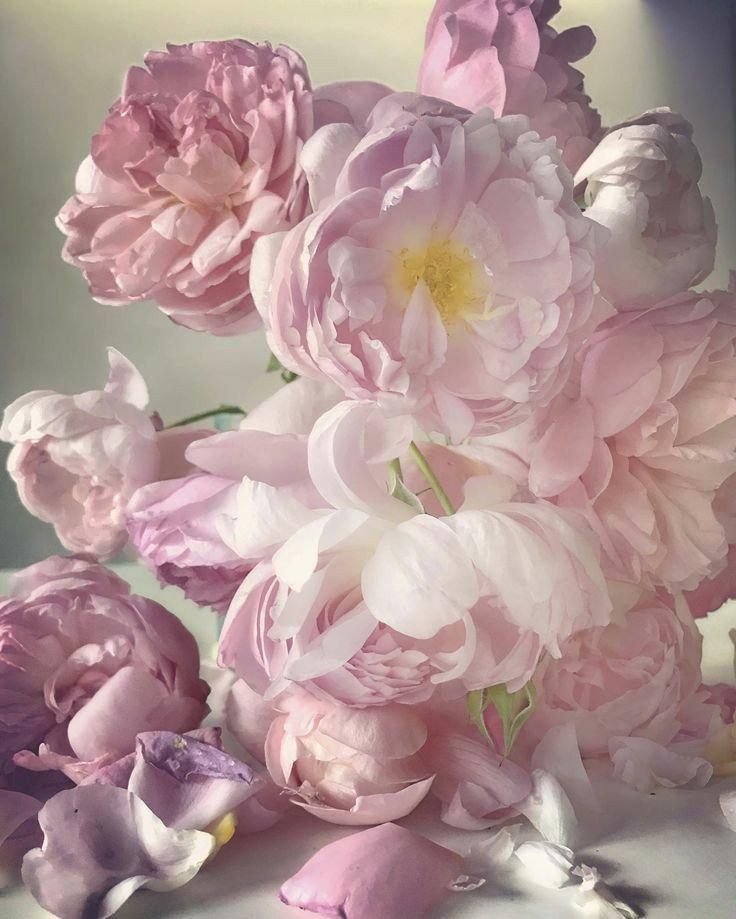 достопримечательность нежные цветы фото большие считали
