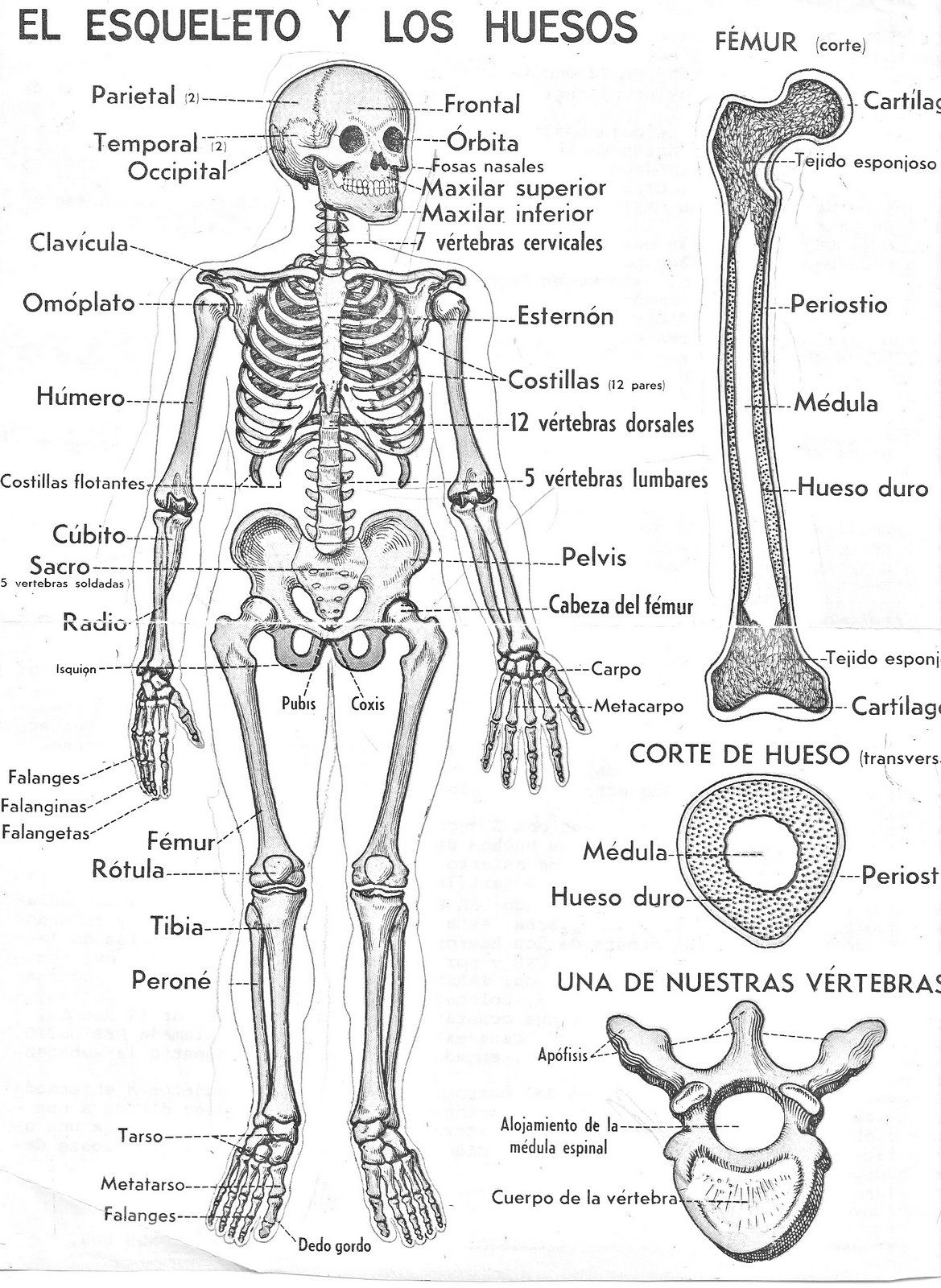 Pin by Elizabeth Cuya on PRESCHOOL | Pinterest | Medicine, Anatomy ...
