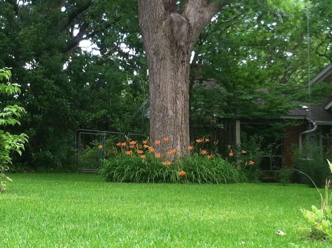 Nice garden trees  Daylilies make a nice border around the tree but require a decent