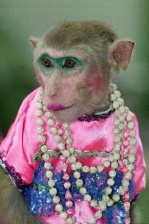 Image result for monkey dressed up