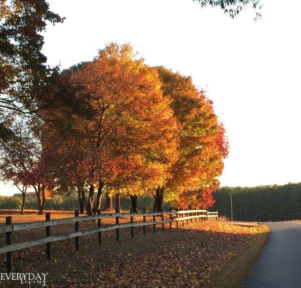 Signatures Of Autumn | Everyday Living
