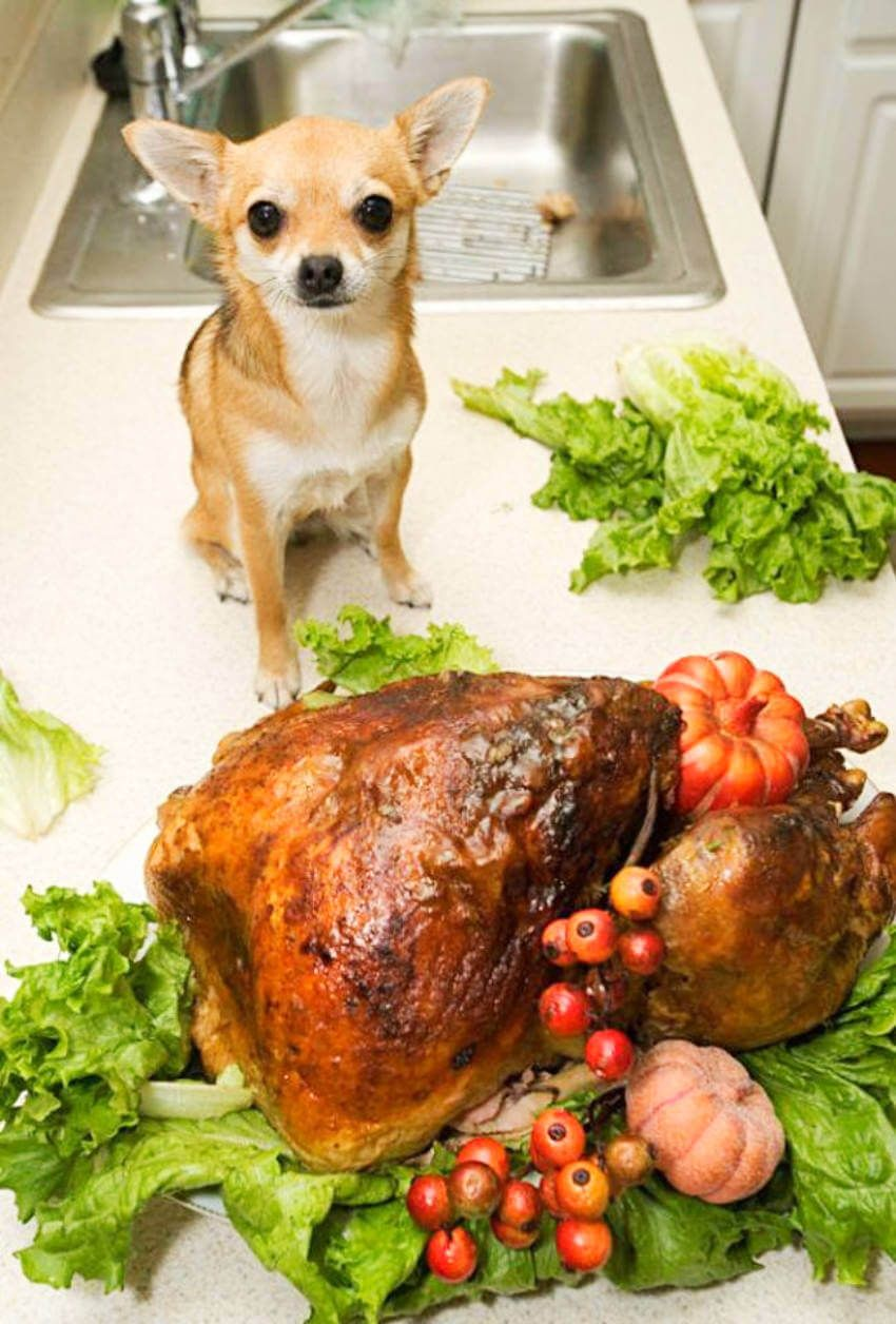 11 Pets Who Love Celebrating Thanksgiving Homemade Dog Food Dog