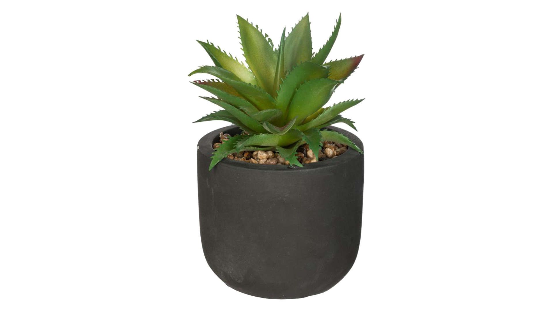 Pot De Plante Pas Cher plante verte en pot ethnik modèles assortis en 2020 | plante