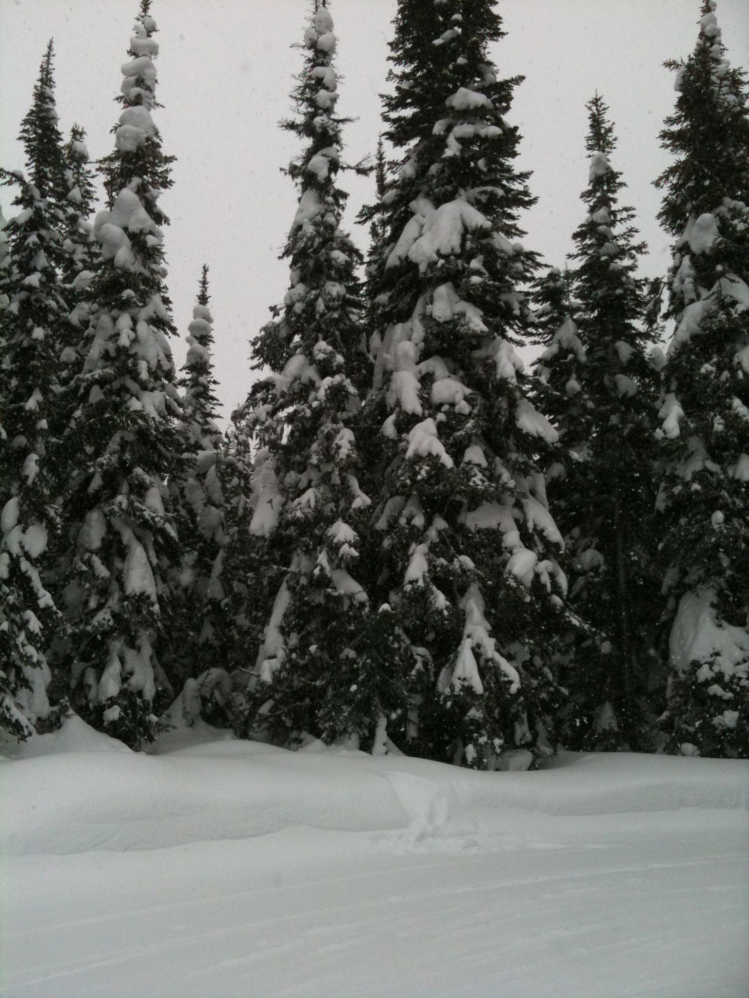 Skiing surrounded by snow covered trees at Silver Star Mountain Vernon, B.C.