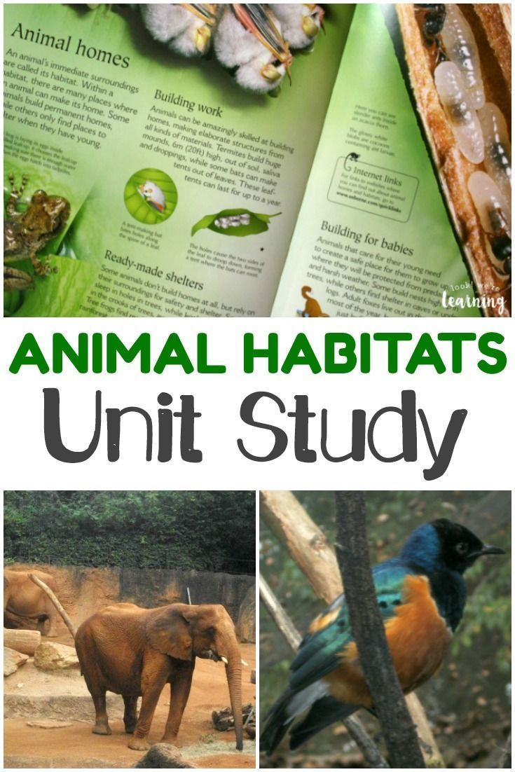 Homeschool Unit Studies: Animal Homes Unit Study