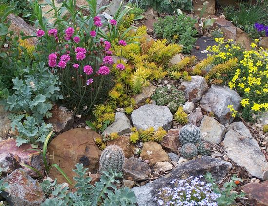 Rock Garden Ideas For Small Gardens | ... Traditional Rock Garden Plants In  The