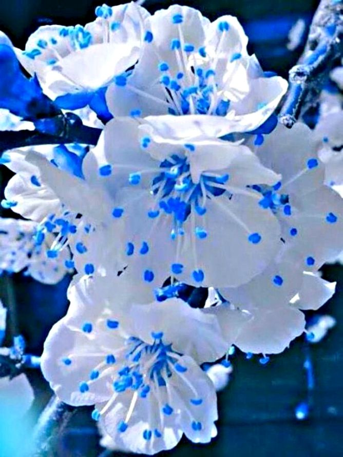 Paisajes De Flores Naturales Bellas Flores Smukke Blomster