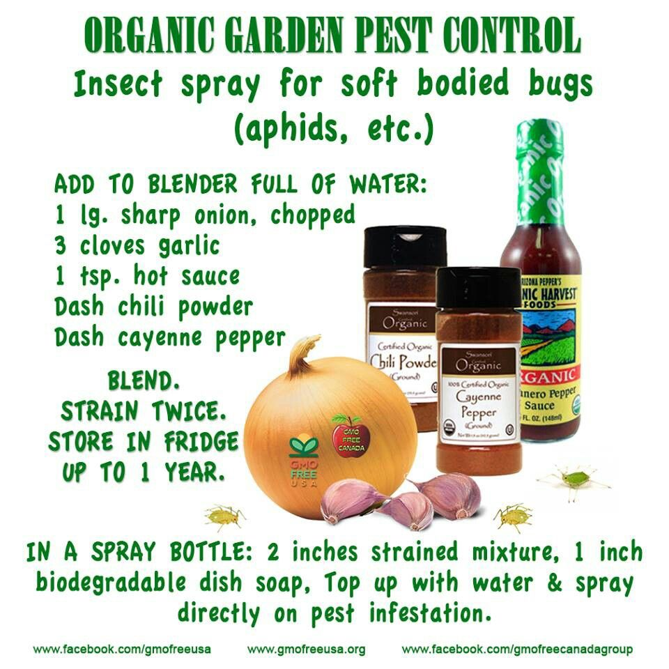 Organic gardening pest control organic gardening and for Garden pesticides