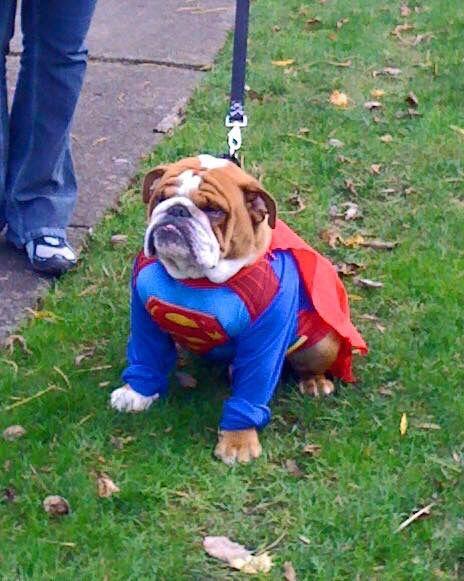 Super Dog Dog Pounds Dog In Heat