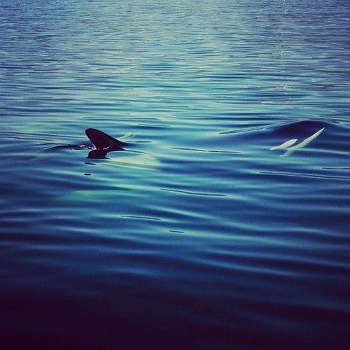 Jeremy Koreski Photographer Surface Tension Orca Sea And Ocean