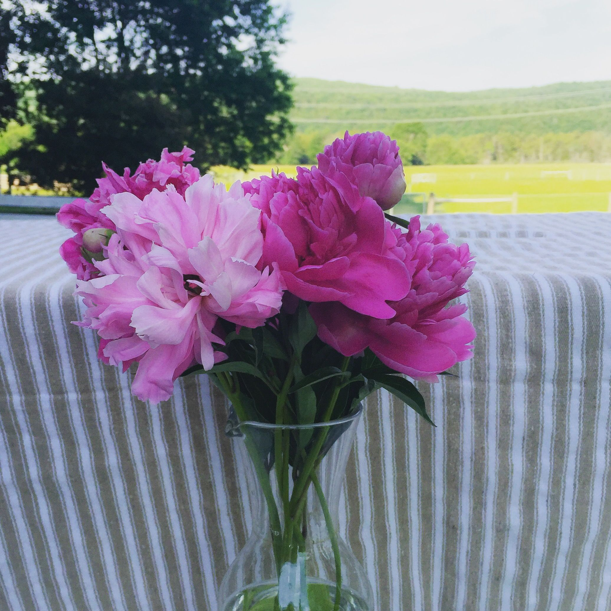 Pink peonies are the most beautiful flower flora farming pink peonies are the most beautiful flower izmirmasajfo