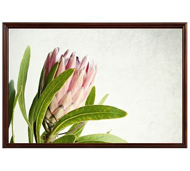 """Protea 1 Framed Print by Lupen Grainne, 42 x 28"""", Ridged Distressed Frame, Espresso, No Mat"""