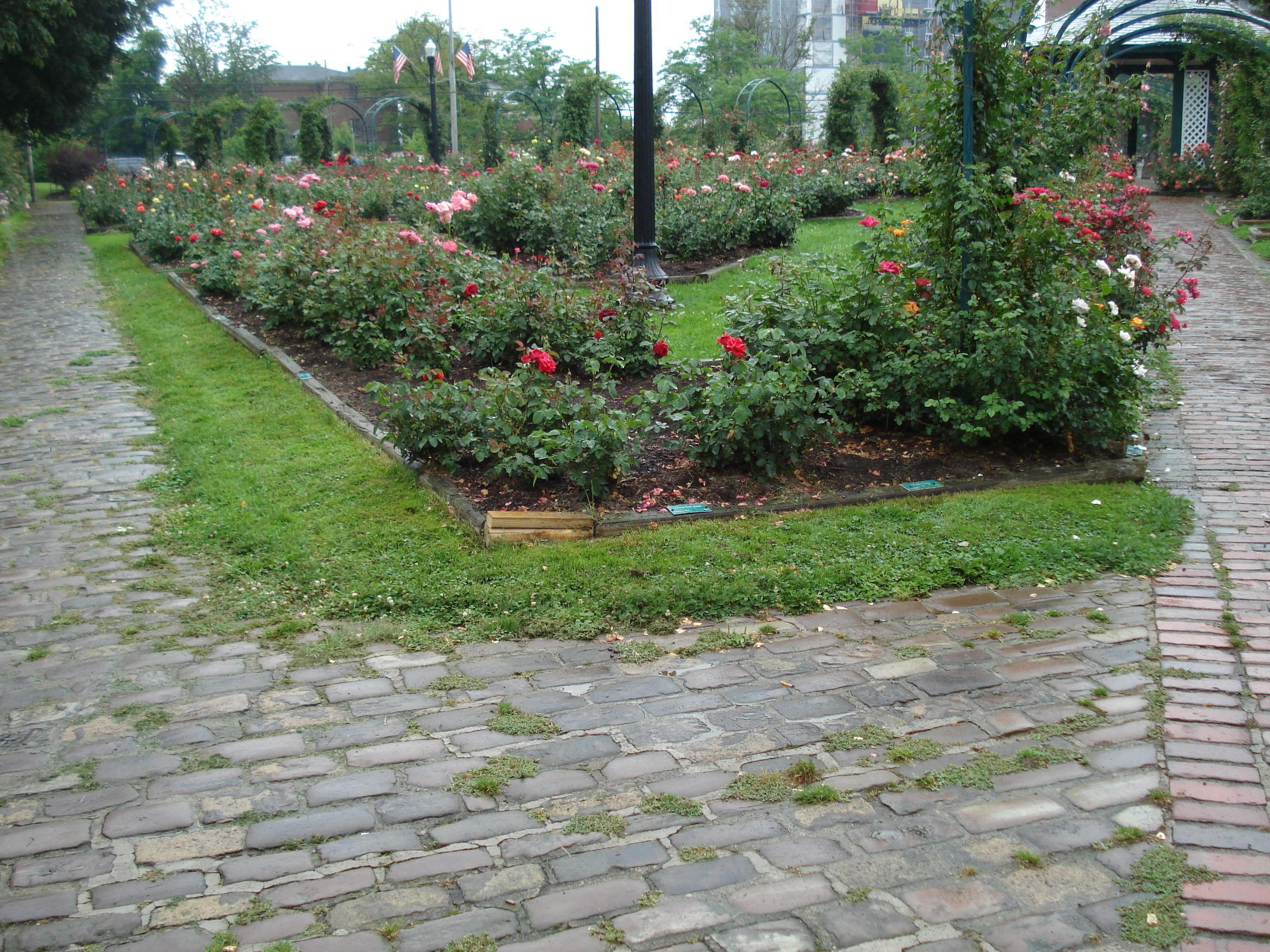 Dr. E.M. Mills Rose Garden is located in Thornden Park ...