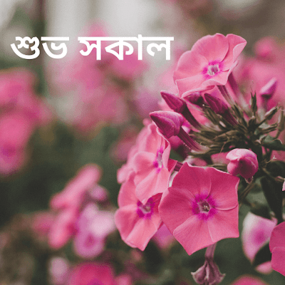 Good Morning In Bengali In 2020 Good Morning Images Free Good Morning Images Morning Images