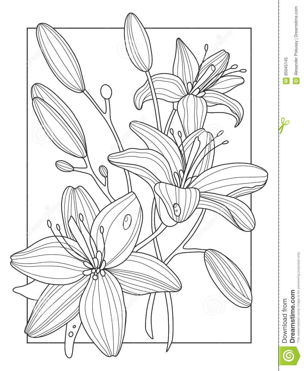 Lily Flowers Coloring Book Vector Illustration Stock