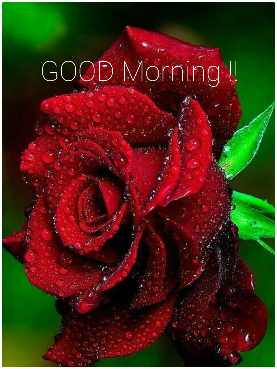 Good Morning Flowers Pinterest Red Roses Flowers And
