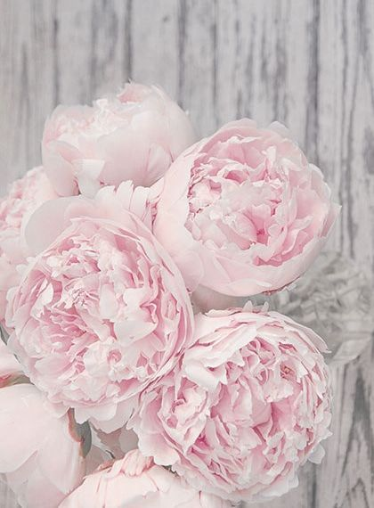 set of 2 pastel pink peony prints | floral wall art set | pink and