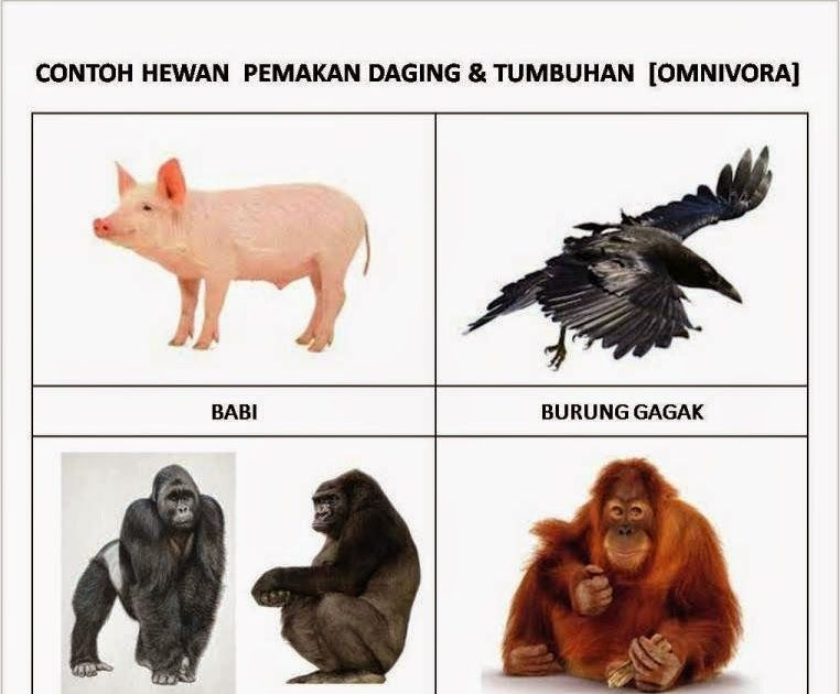 Hasil Gambar Untuk Gambar Gambar Hewan Animals Image English Vocabulary