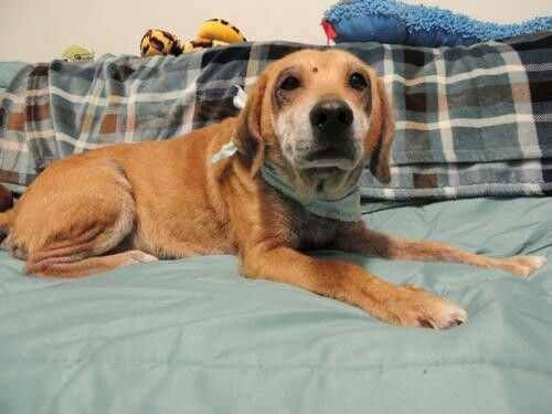 Haylow Beagle Mix Oswego Ny Dogs Up For Adoption In Nny