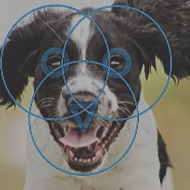 Barc Friends For Life Incorporate Facial Recognition Software Into Pet Services Service Animal No Kill Animal Shelter Dog Rescue Shelters