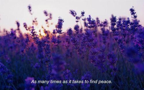 lavender aesthetic