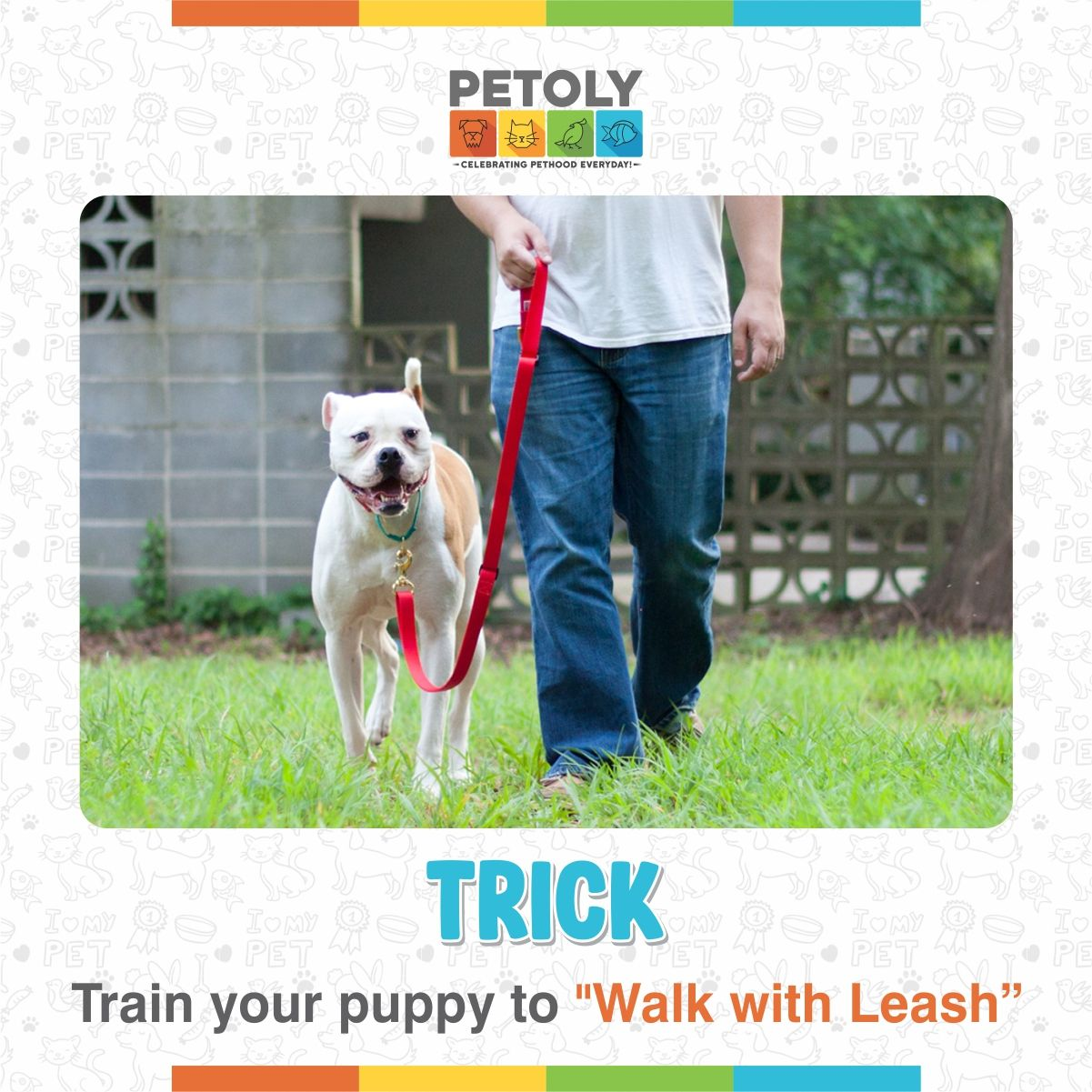 Train Your Puppy To Walk With Leash In 2020 Training Your Puppy Leash Training Pet Training