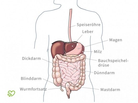 Der Magen | Altenpflege / Gerontology nurse | Pinterest | Medical