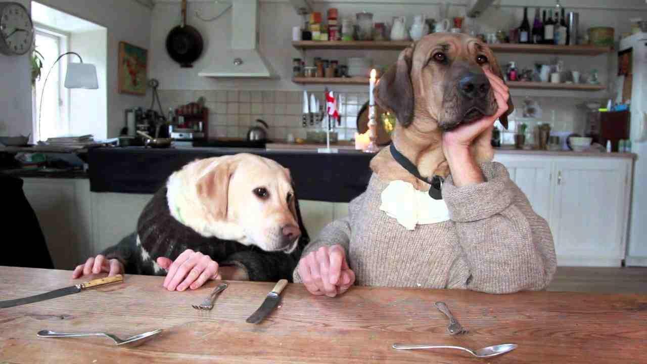 Labrador Bambini ~ Funny baby and dog playing together. funny black pet labrador and