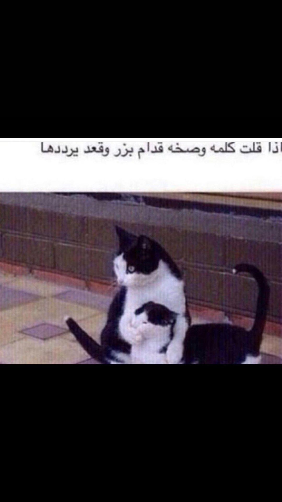 Funny School Memes Funny Memes Arabic Funny