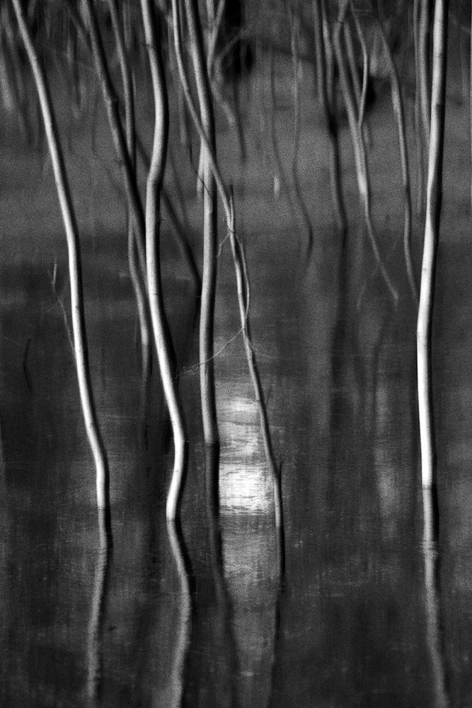 Duennwald Frozen Swamp 21 | Abstract