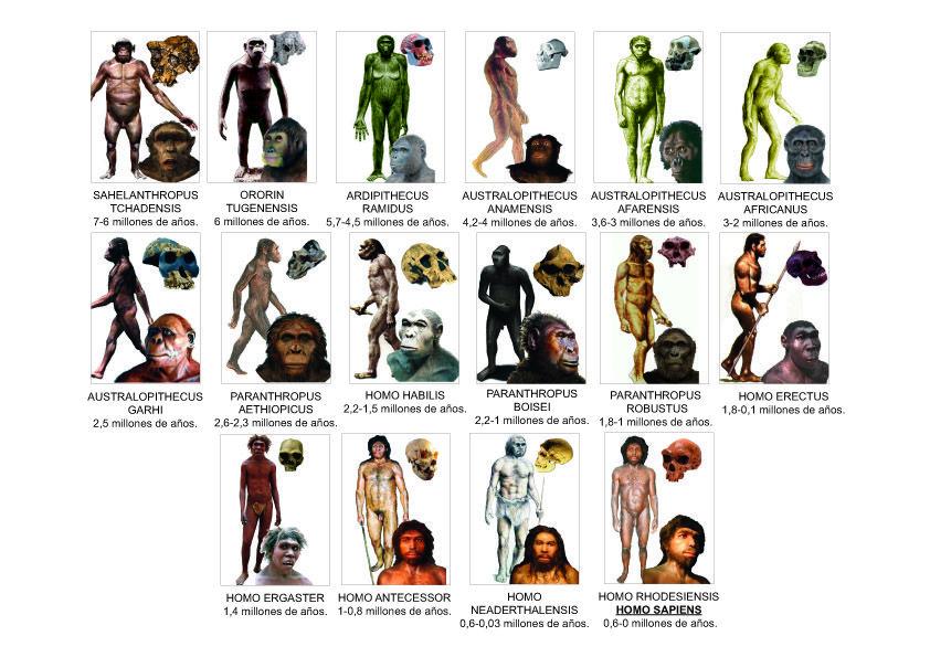 homínidos evolución.jpg   PREHISTORIA   Pinterest   Prehistoria ...