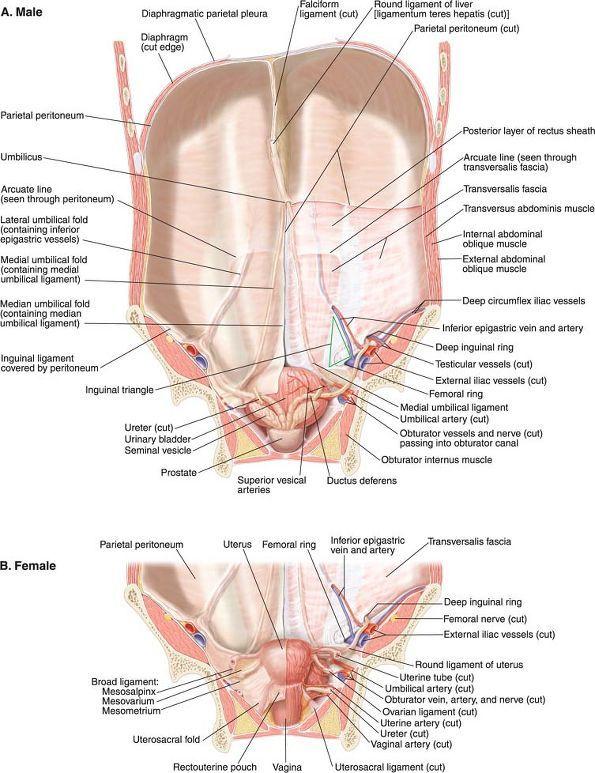 Ovid: Lippincott Williams & Wilkins Atlas of Anatomy | anatomia ...