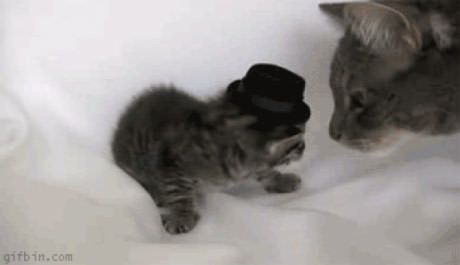 But Dad I Wanna Dance Crazy Cats Kittens Funny Cat Videos